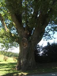 Chêne de Sully, Clédat, correze, village abandonné, visite, randos, VTT, dos d'ânes, Cheval, fête des roses, cocquelicontes, fête du pain, maquis,
