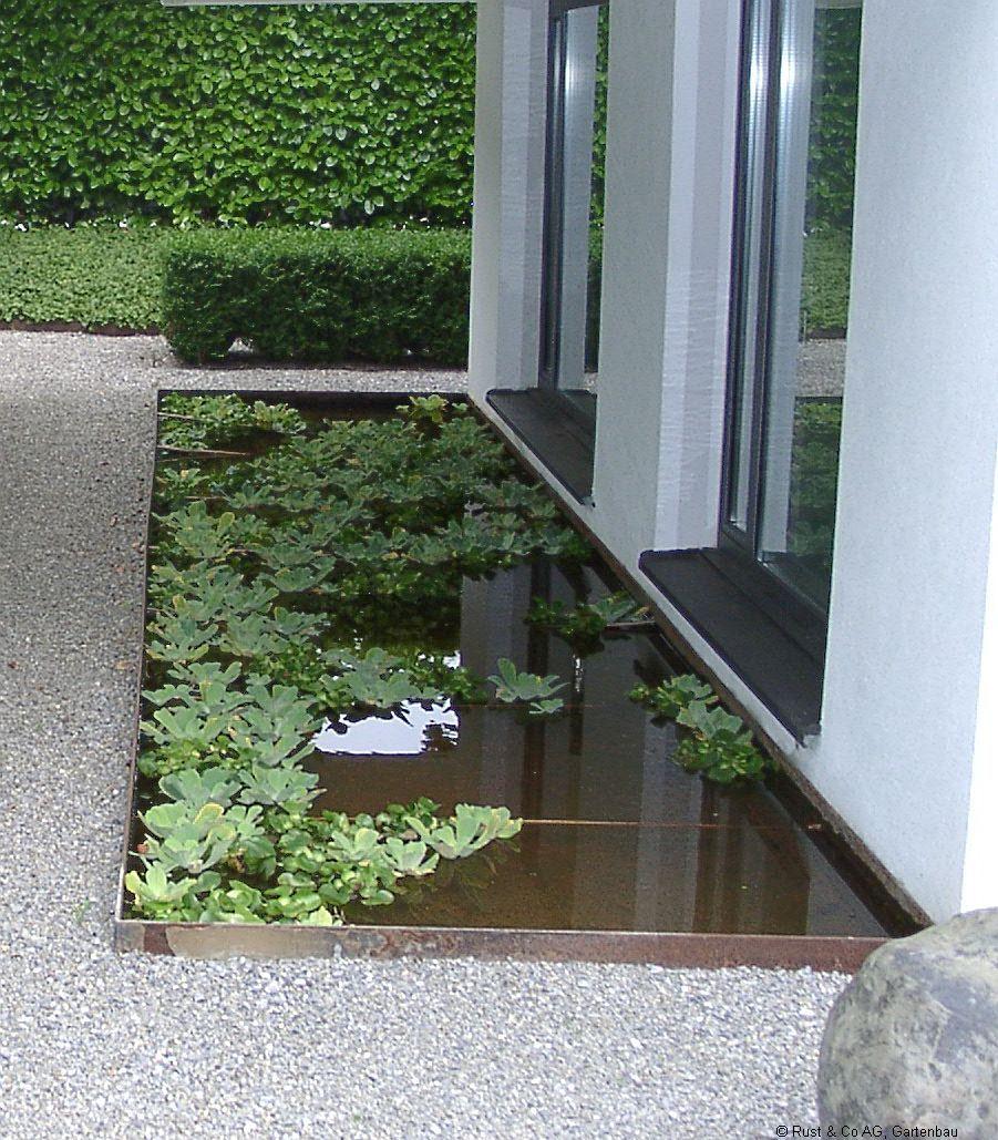 Stahlbecken mit Schwimmpflanzen
