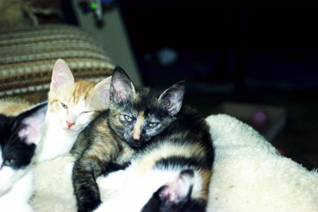 Chiara und Shila