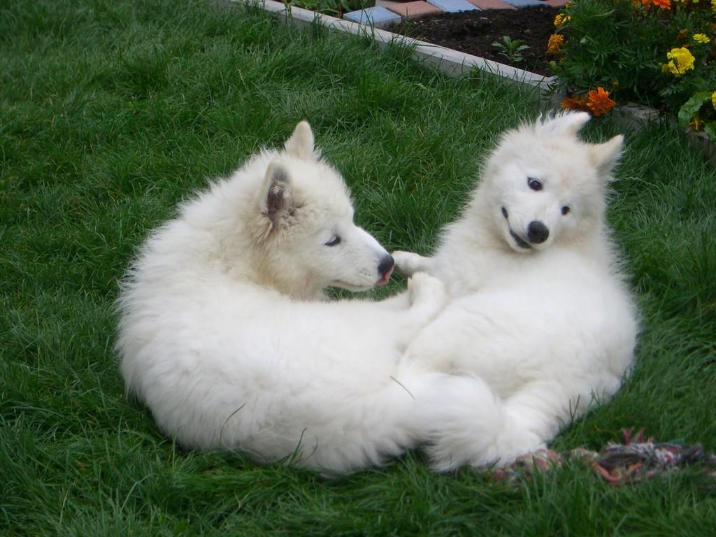 Geschwister glücklich vereint!