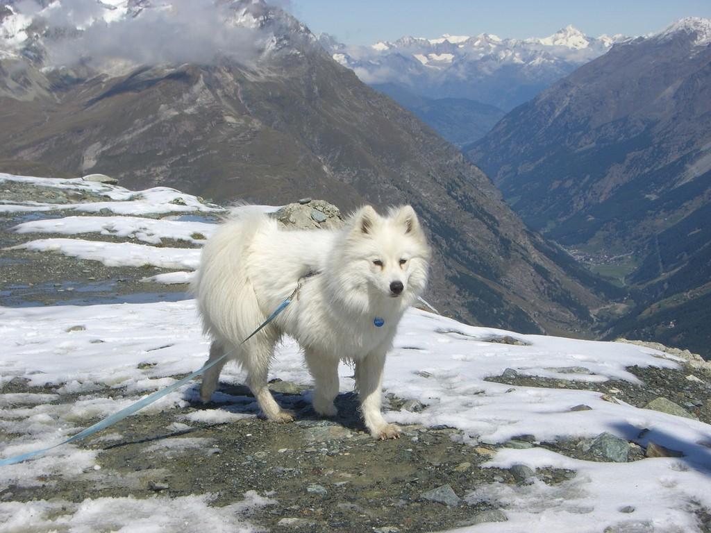 auf dem Trockenen Steg Zermatt