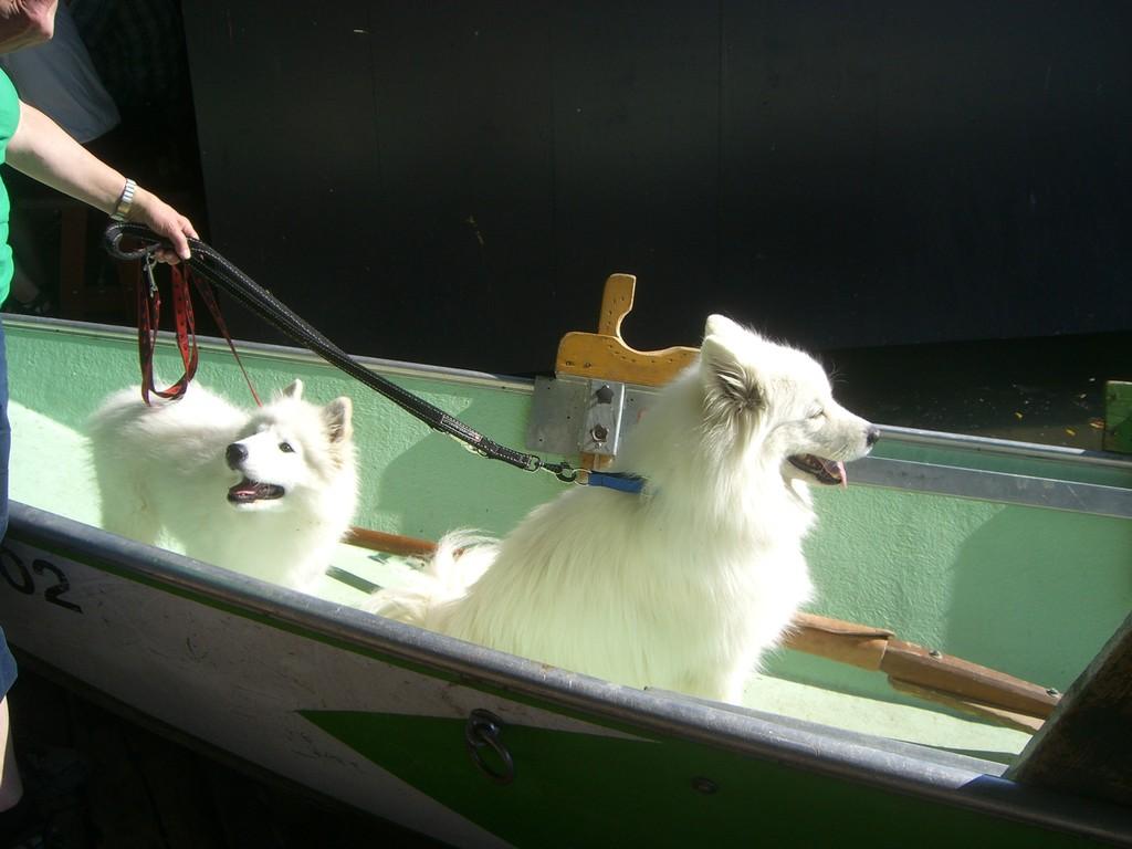 Im Boot über die Limmat