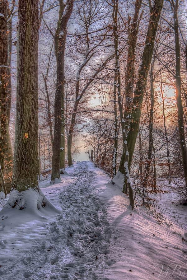 Verschneiter Winterwald bei Kloster Weltenburg.