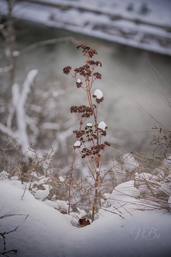 Einsame Pflanze.