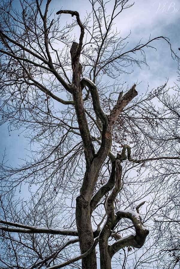Aussergewoenlicher Baum bei Kloster Weltenburg.