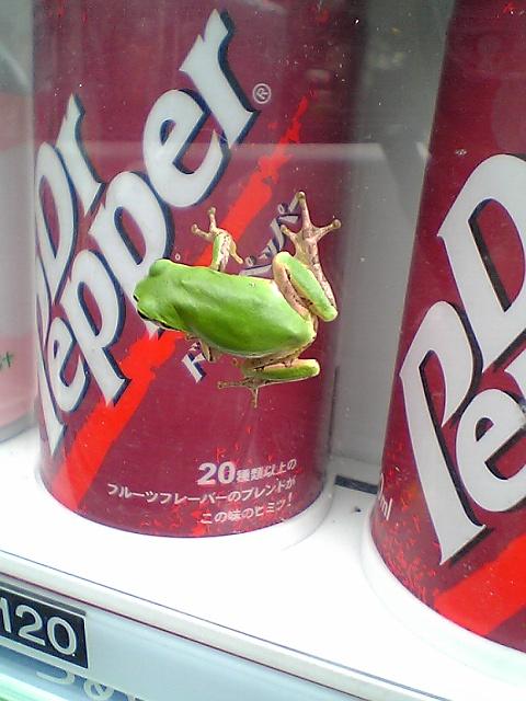 カエルも暑い。これ買える?