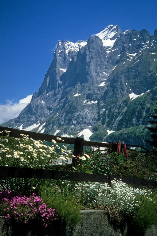 Garten mit Wetterhorn  3701m