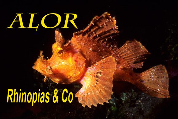 Bild: Rhinopias frondosa