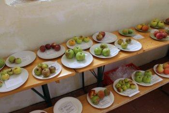 Historische Vielfalt - Kartierung von alten Apfelbäumen in Heynitz