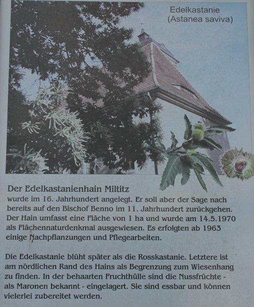 Tafel am Esskastanienhain Miltitz, Foto: E. von Watzdorf, 2019