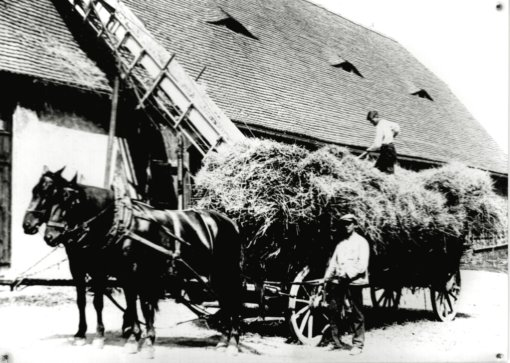 Heueinbringung Rittergut Heynitz, Foto: Nachlass Familie Benno von Heynitz