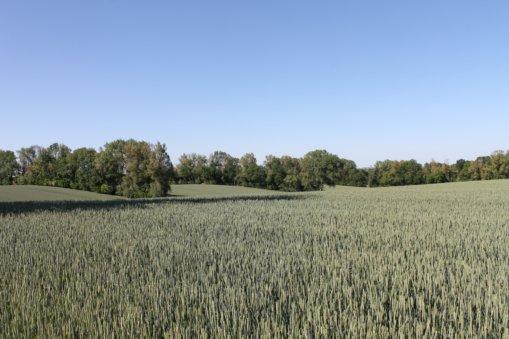 Feldparzellen mit Baumreihen aus den 1940er Jahren, Foto: E.v.W., 2020