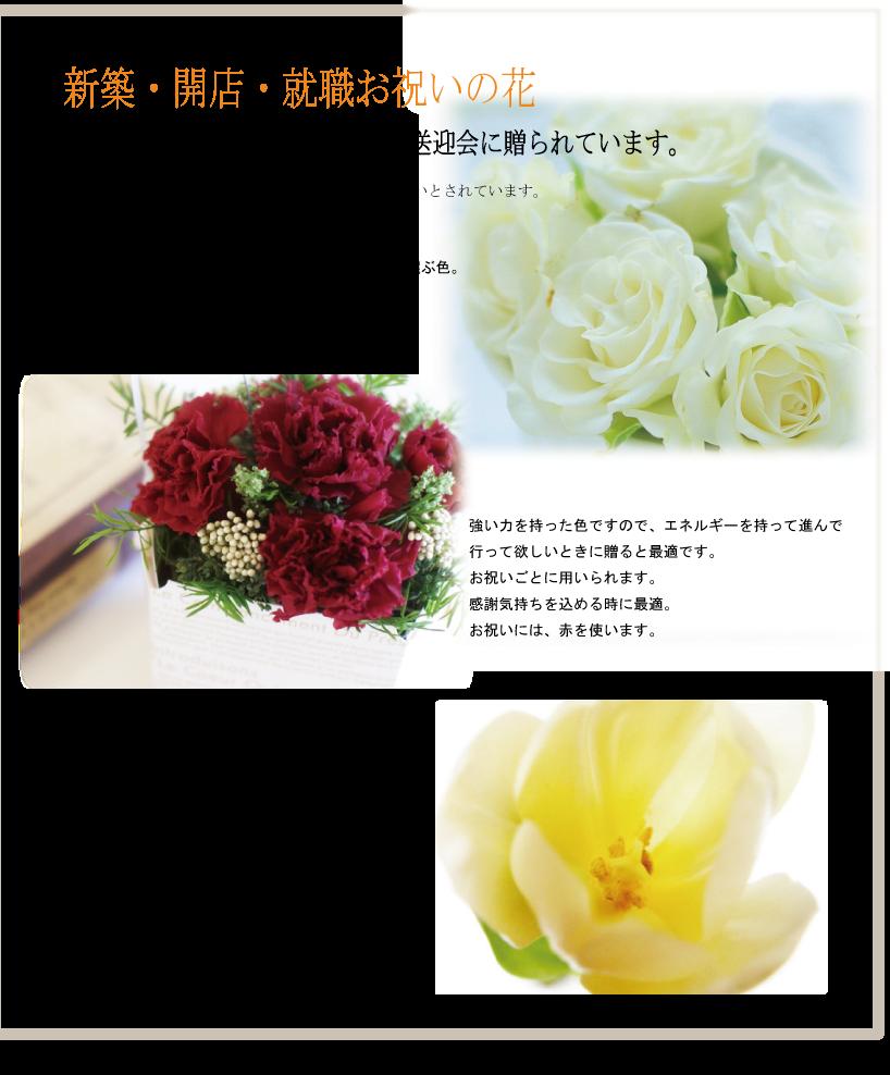 新築・開店・就職・お祝いの花、歓送迎会に贈られる時は、白・赤・黄色系が良いとされています。