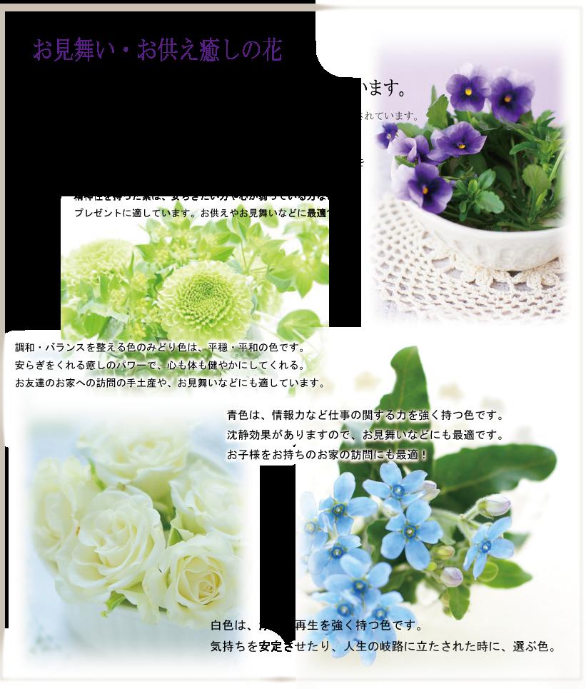お見舞い・お供え癒しの花、こんな時は、紫、青、グリーン、白の花が良いとされています。