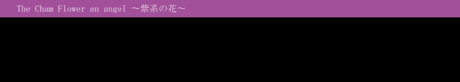 紫の花をあなたは、どんな方に贈りますか?