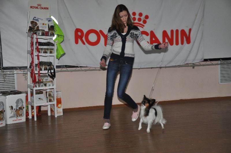 Дарья Рожкова и папийон