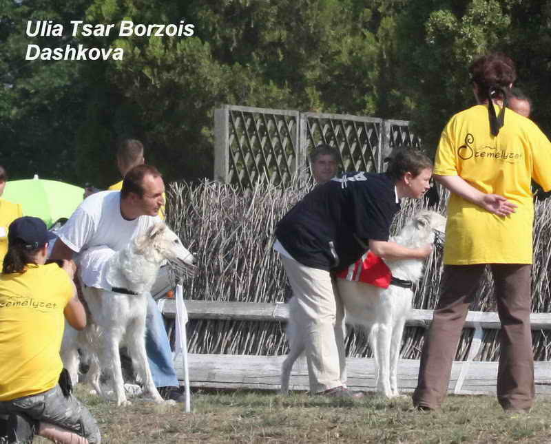 European Coursing Championship 2012 in Hungary, pics by R.Schock
