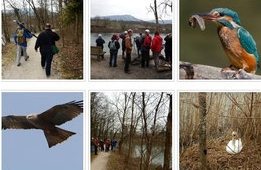 Vogelexkursionen Führung Fische in der Emme + Umwelt