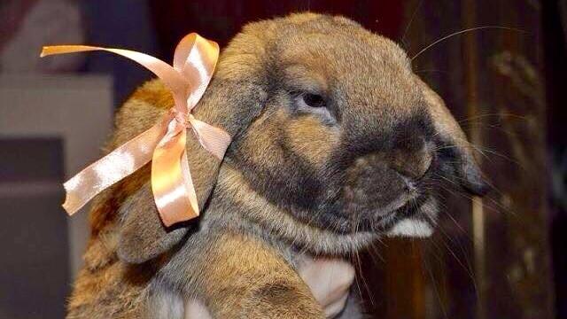 Кролик Кафи живет теперь в Будапеште и ему здесь хорошо!