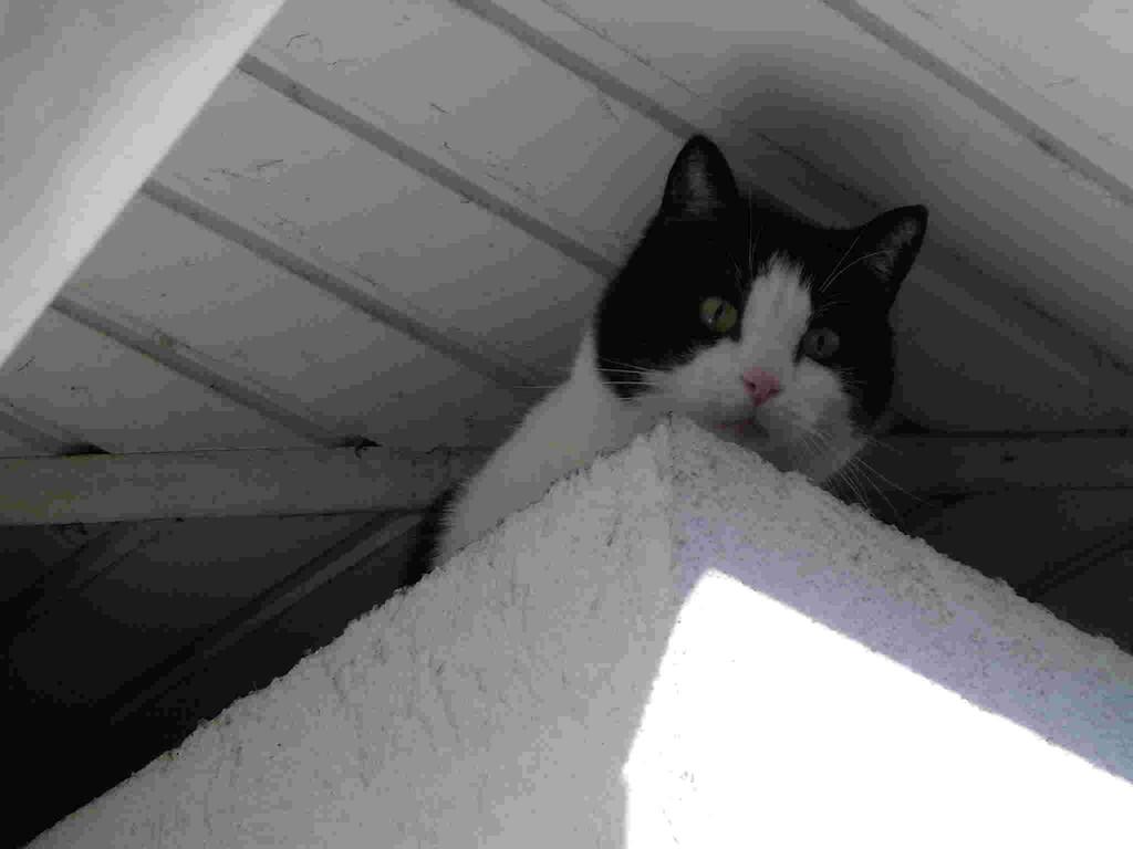 Olga beobachtet wer da kommt...