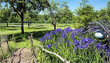 Blick in den Garten der Akademie (Foto: Willi Rolfes)