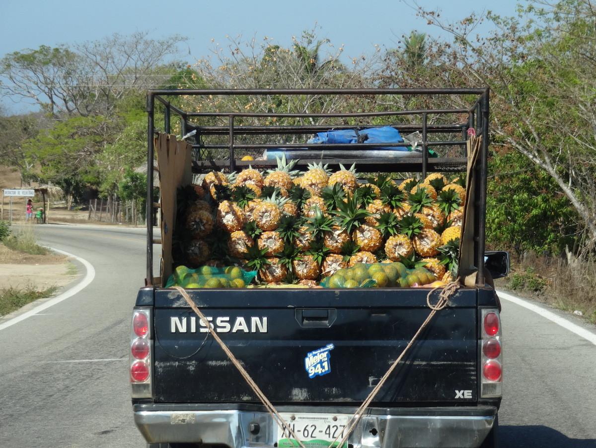 Auf dem Weg nach Acapulco mit Ananas…