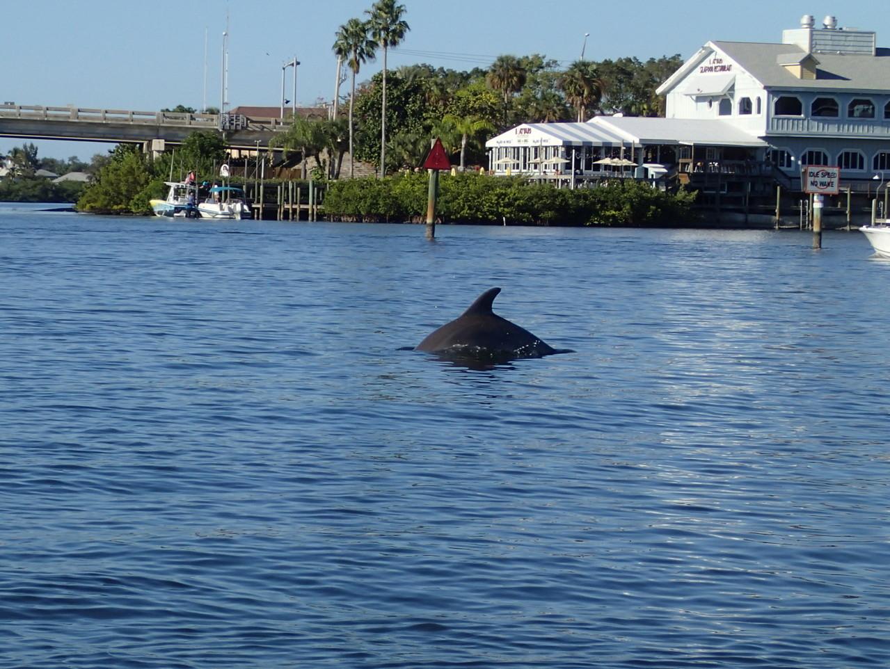 ...schon wieder Delfine ;-)
