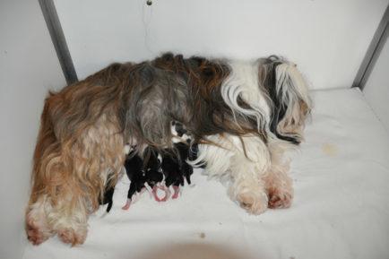 Mama Laya und ihre Babys