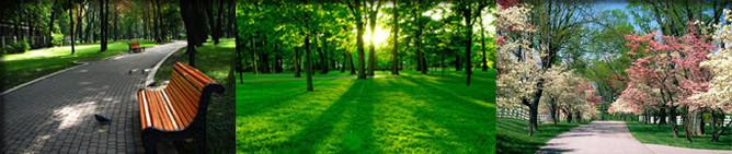 спил деревьев таганрог компания Лесничий