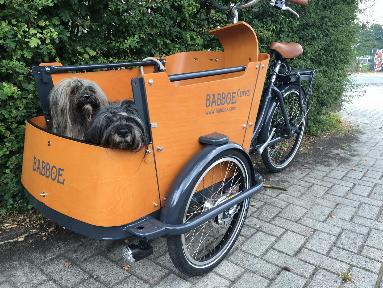 Auch im Transport-Rad gerne unterwegs: Mika