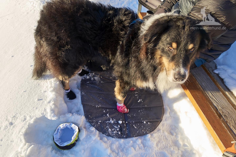 Winter Wanderung Inzell: Booties und das Ruffwear Landing Pad leisteten gute Dienste.