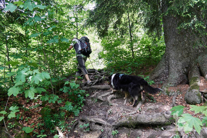 ... wieder in den schattigen Wald hinein und über einen manchmal sehr matschigen Weg ...