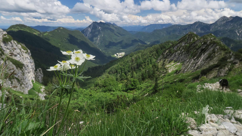 ... Weitblicke in die Chiemgauer Alpen eingeschlossen ...