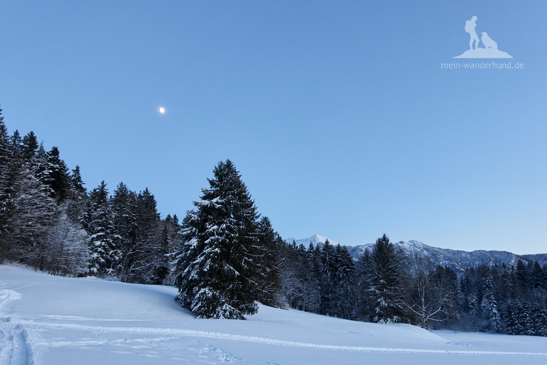Winter Wanderung Inzell: Die letzten Meter bei Vollmond