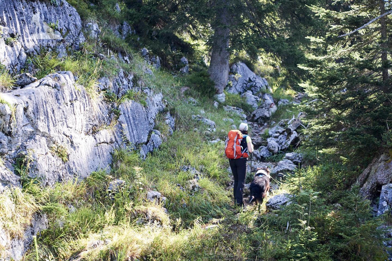 Wandern mit Hund Seehorn: Los gehts über einen wildwüchsigen Pfad ...