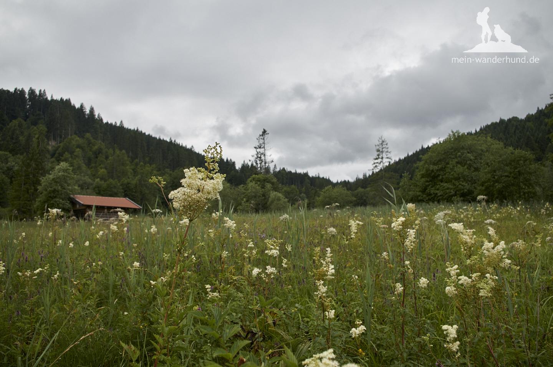 Auf dem Weg: Kräuterwiesen in voller Blüte.