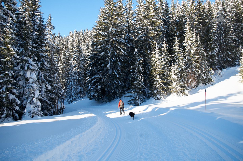 Winter-Wandern mit Hund im tief verschneiten Winterwald.