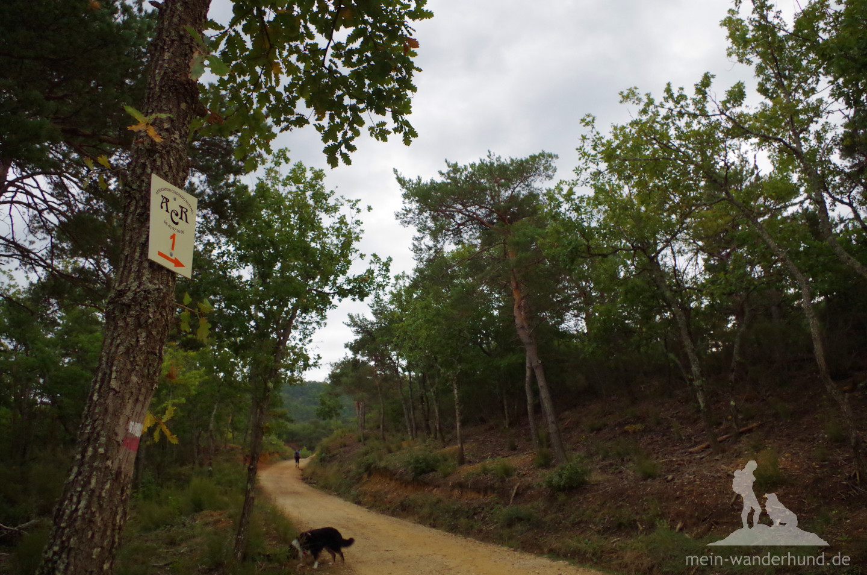 Der Anfang der Hunde-Wanderung im Colorado provençal ist noch unspektakulär ...