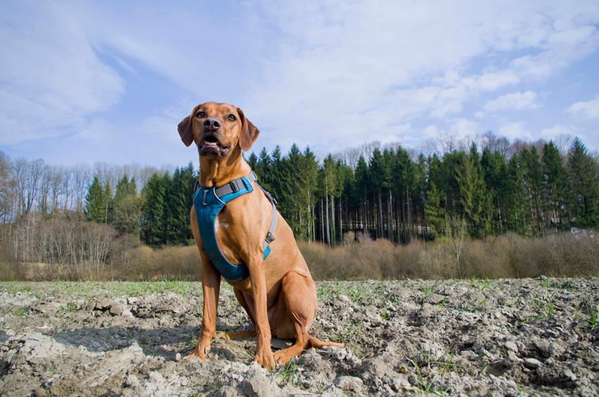 Geschirr für Hunde, Hundegeschirr