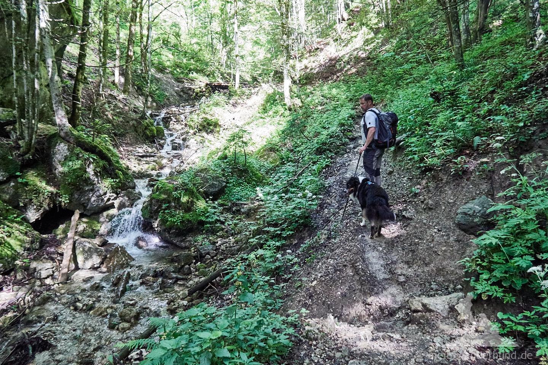 Der Aufstieg auf die Hörndlwand beginnt auf einer Forststraße ...