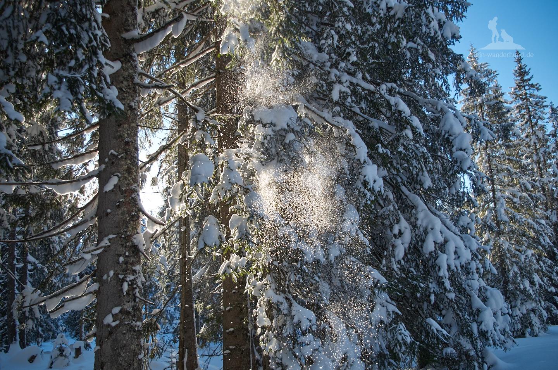 ... fallend von den Bäumen.