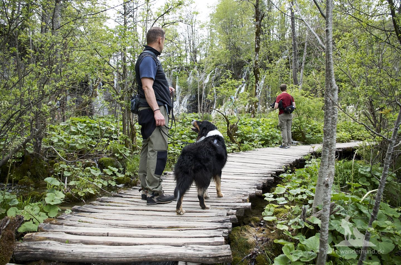 Plitwicer Seen mit Hund: Auf den schmalen Holzstegen