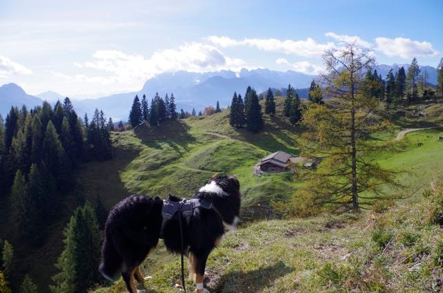 Sicheres Geschirr für Bergwanderungen mit Hund: Das Ruffwear Webmaster Harness.