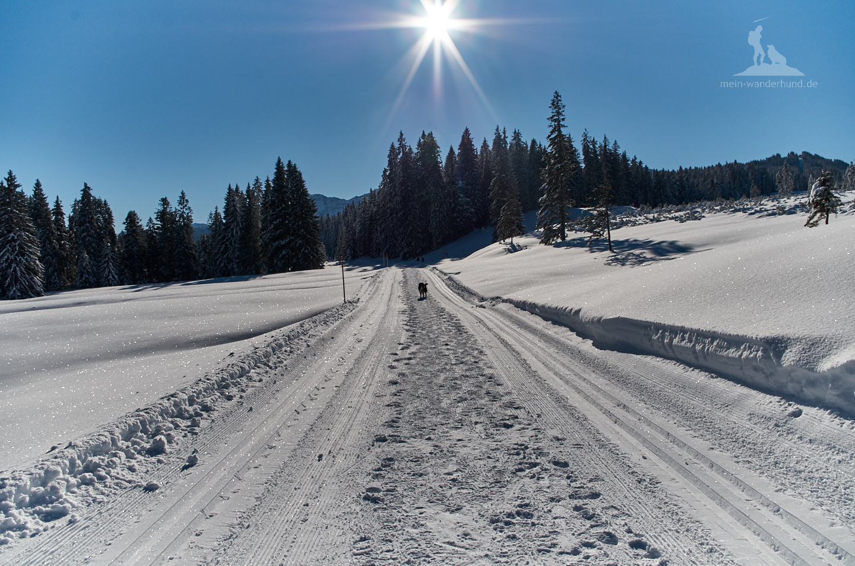 Winterliche Wunderwelt Winklmoosalm.