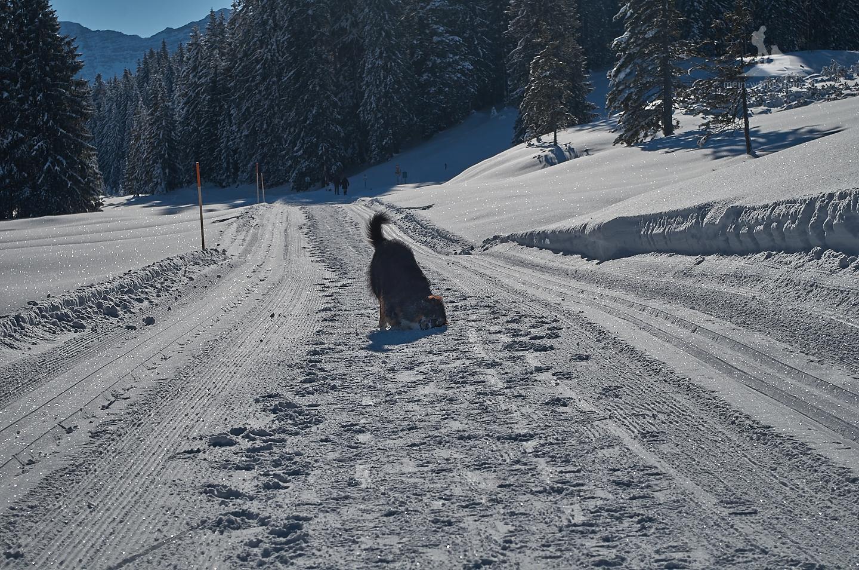 Endlich: Aris Spezialität - Gesicht im Schnee reiben ...