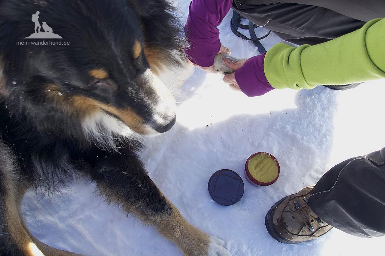 Wanderhund-Pfotensalbe im Test