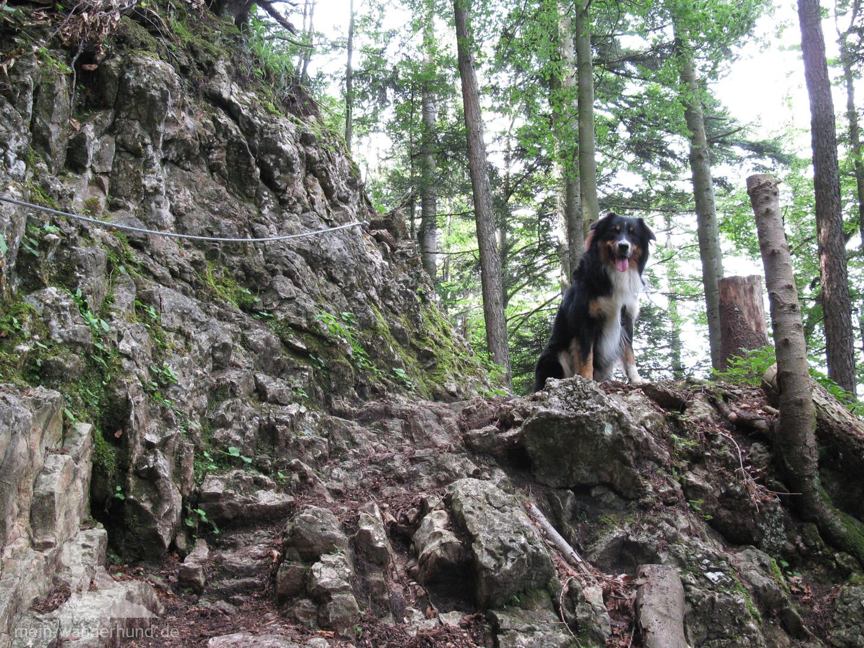 ... die für große Hunde in einigen Sprüngen überwunden sind.