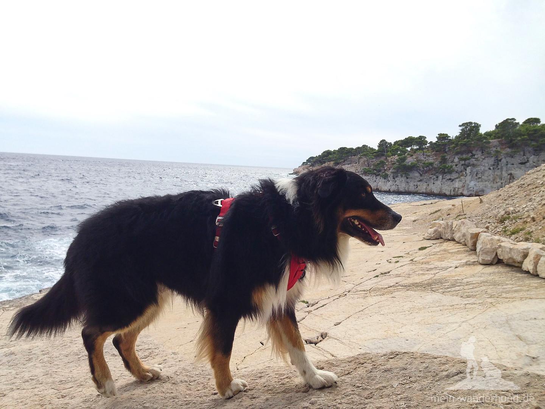 Wanderhund Ari findet die Brandung irgednwie unheimlich ...
