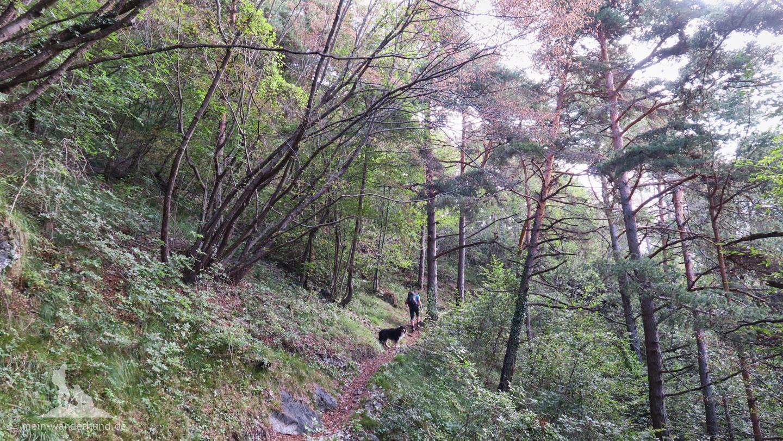 Vom Campingplatz bei Ventone startet die Hundewanderung direkt im Wald.