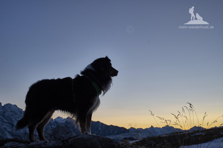 Mit Hund zu den Drei Zinnen: Stille an den Zinnen.